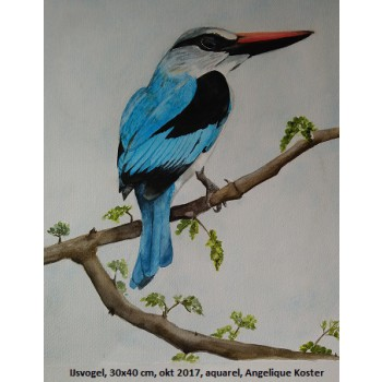 ART IJsvogel